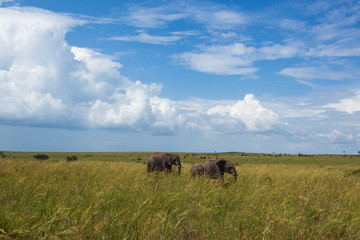 elephants, nature reserve, cloud, day, sun, travel, Kenya