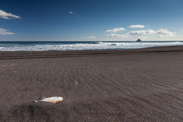 Surf on coast. Black sand wild beach. Rock  and seashell.