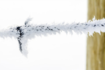 Close up of frost growing on barbwire