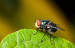 fly on green leaf - 79325086