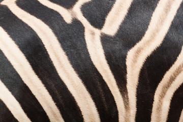 Abstract texture zebra skin