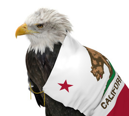 American bald eagle wearing the California state flag