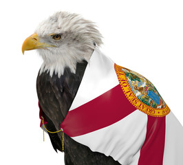 American bald eagle wearing the Florida state flag