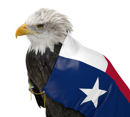 American bald eagle wearing the Texas state flag