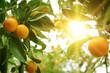 Leinwanddruck Bild - Orange tree