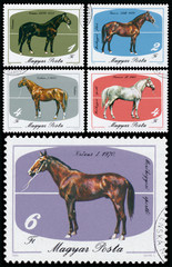 Stamps printed in Hungary shows Horses