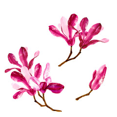 Set of red watercolor magnolia flowers