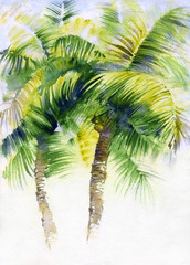 Watercolor painting with tropical palms