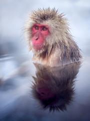 Affe beim baden in Yudanaka Onsen Japan