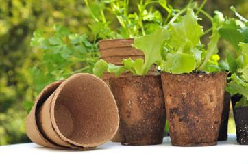 pots de culture biodégradables et semis