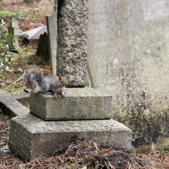 grauhörnchen auf grabstein
