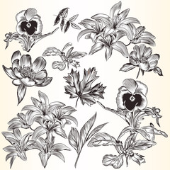 Collection of vector decorative hand drawn flowers for design