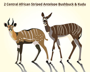 2 central african antelope bushbuck & kudu illustration
