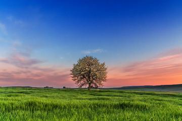 Tra Puglia e Basilicata: paesaggio agreste primaverile.ITALIA