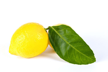 Fresh lemons on White ground