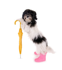 Kleiner Hund mit Regenschirm
