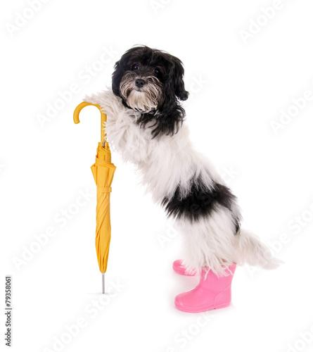 Foto op Aluminium Dragen Kleiner Hund mit Regenschirm