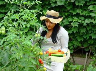 Gardener is Picking up a Vegetables