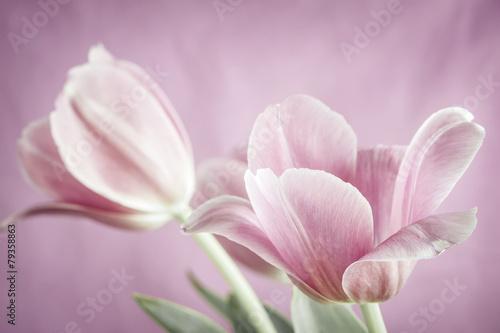 Foto op Aluminium Tulp Pink tulips