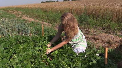 Pregnant farmer woman in dress picking snap beans in farm