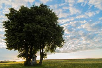 Baum mit kleiner Kapelle