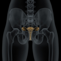 Woman with visible anatomic reproductive organs structure in X-r