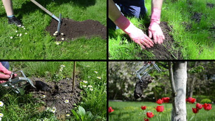 Fighting mole rodent with trap in garden. Video clips collage.