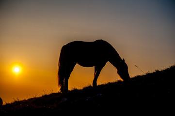 cavallo pascolo