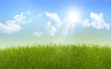 Sunny grass landscape