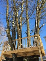 The Seven Tree Treehouse