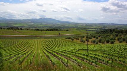 Early morning over vineyards, Tuscany, Italy
