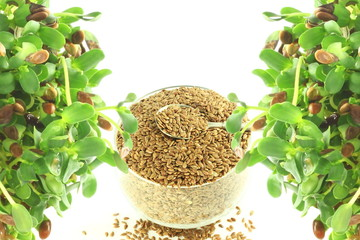 flax seed sprouted and whole closeup in pure white backgroundand