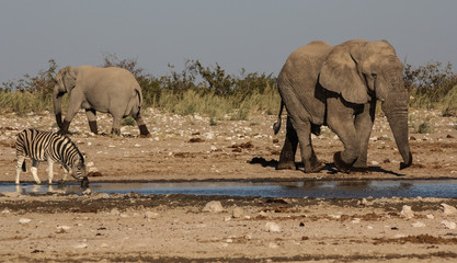 Come and go at the waterhole, Etosha, Namibia
