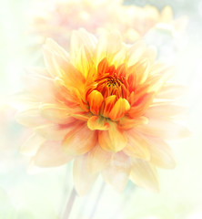 Dahlia Watercolor