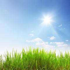 Sonne, Gras und Himmel