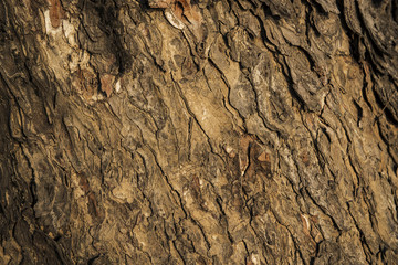 bark of tree background and texture