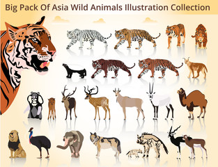 Big Pack Of Asia Wild Animals Illustration Collection