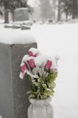 snow flowers1