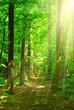 Leinwanddruck Bild - sunlight forest