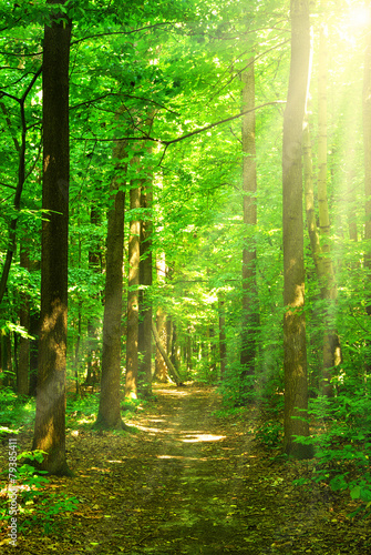 AluDibond Wald sunlight forest
