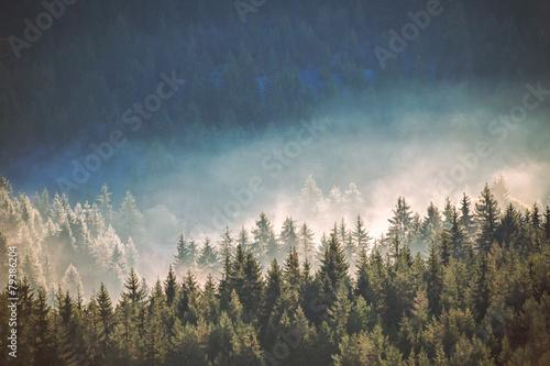Papiers peints Montagne View of misty fog mountains in autumn