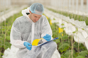 Senior agricultural scientist researching plants and diseases