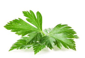 Parsley leaves isolated on white background, closeup