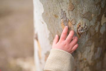 木を触る子供の手