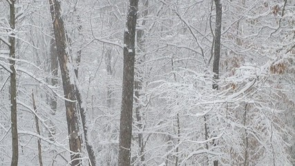 intense snow falling on forest (slow-motion)