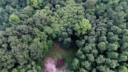 Aerial view of green forest treetops from above airplane flight