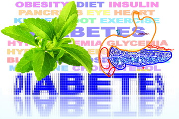 stevia herbs with diabetes word and pancreas