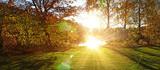Sonne im Wald - 79403471