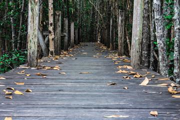 Old wooden bridge