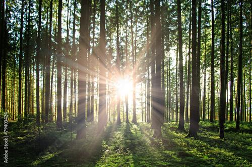 Aluminium Bossen Sonne im Wald